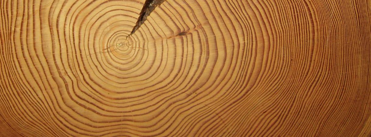 Ajanlaskun ajan rajuin aurinkomyrsky paikannettiin Lapin puista