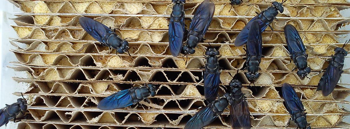 Tutkijavaihto tarjosi tietoa hyönteisten massakasvatuksesta